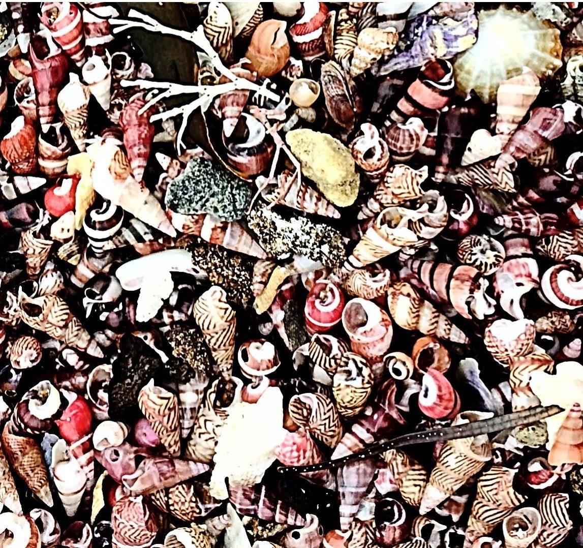 Southern NSW shells